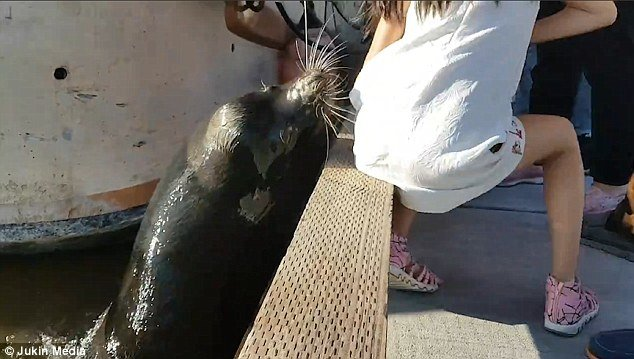 little-girl-and-sea-lion