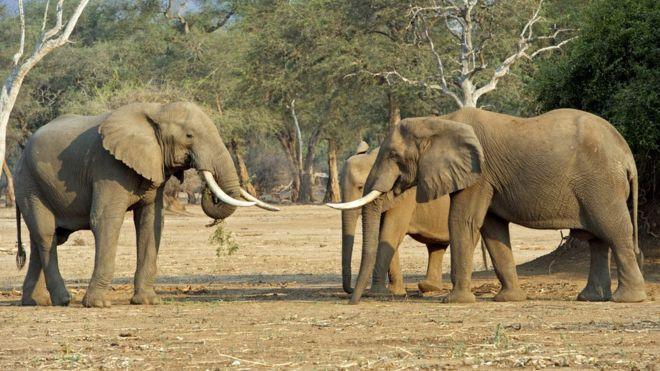Zimbabwe zoo